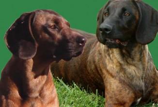 Corso per conduttore cane da traccia