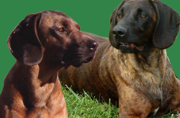 cani gruppo conduttori cani da traccia (2)