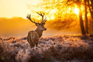 Il Cervo: segni di presenza