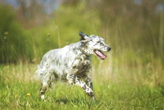 ordinanza 539 del 3 maggio 2020 Addestramento cani