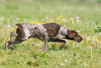 Addestramento cani anche di lunedì